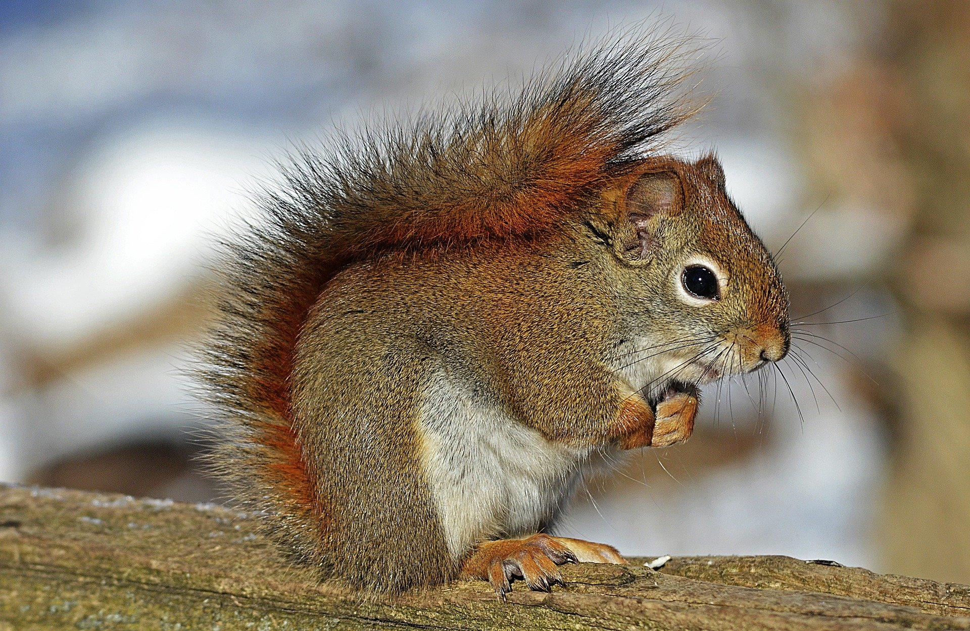 SmartSquirrel